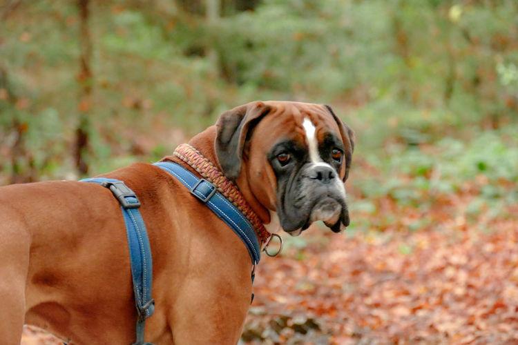 Dog Canine Pets