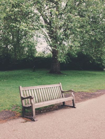 Bench Tree Empty Absence Growth Green Color Nature Chair No People Grass Outdoors Beauty In Nature Day