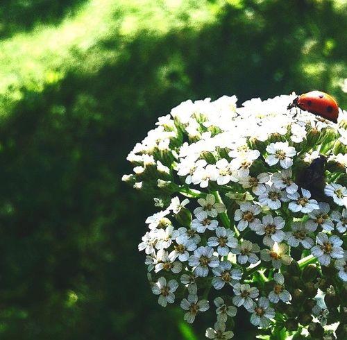 Little Critter. Ladybug Nature Myinsta Pretty