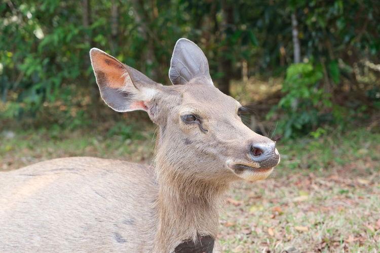 Close-up of deer on land