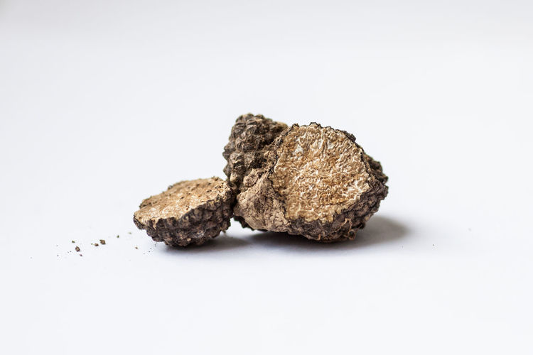 Tuber aestivum, summer truffle on the white background Black Truffle Cut Luxury Food Tuber Tuber Aestivum Vegetarian Biology Close-up Expensive Expensive Food Food Ingredient Italian Food Mushroom Mushroomphotography No People Summer Summer Truffle Truffle Truffles Truffles Black Underground Mushrooms White Background