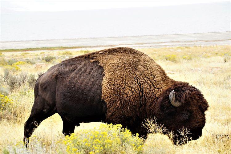 One Big Animal