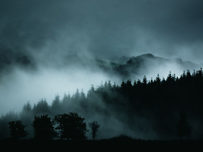 Silhouette trees in forest against sky during foggy weather