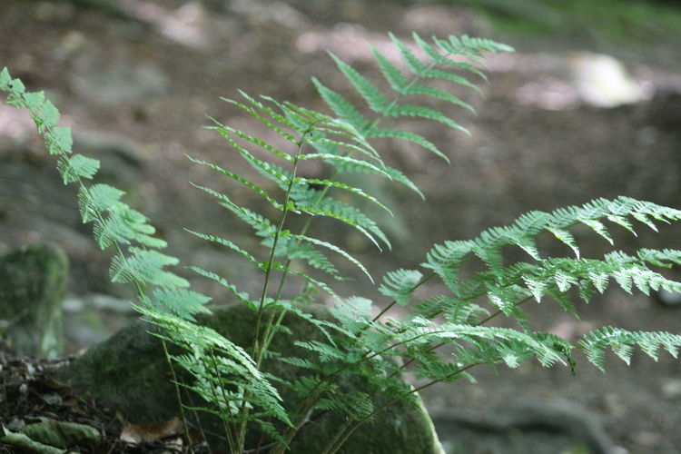 Close-up of fern growing on tree
