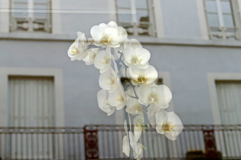 White orchids seen through glass - material