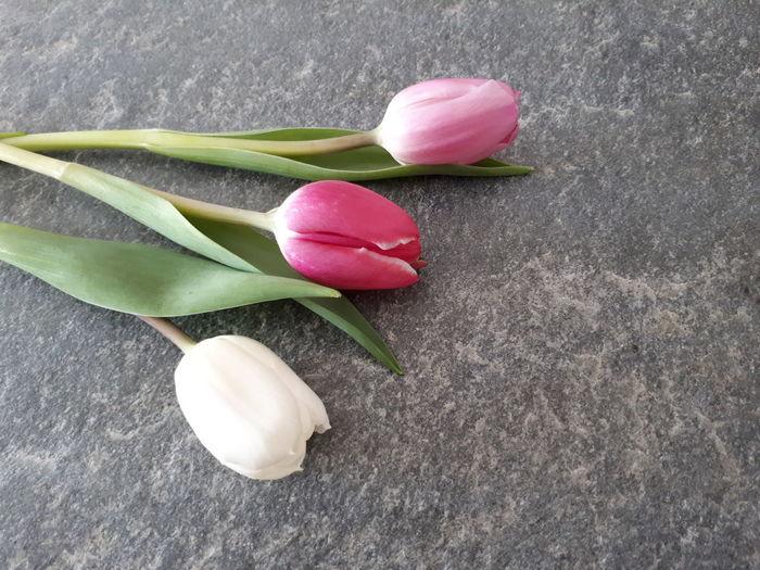 Rosen auf