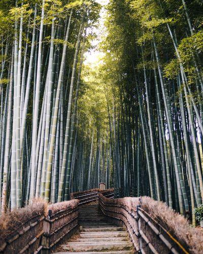 Japanism Bamboo