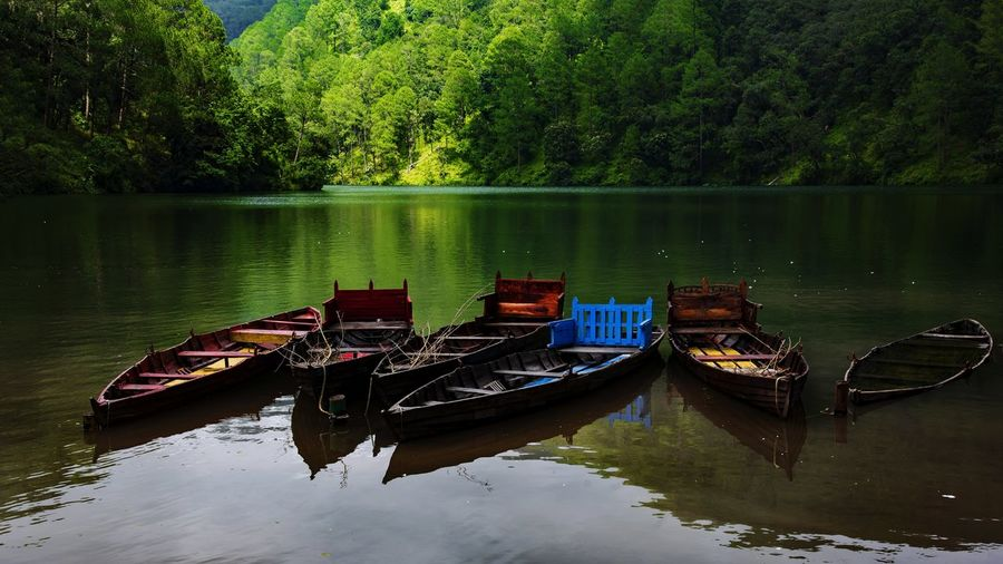 Boats moored on lake against trees