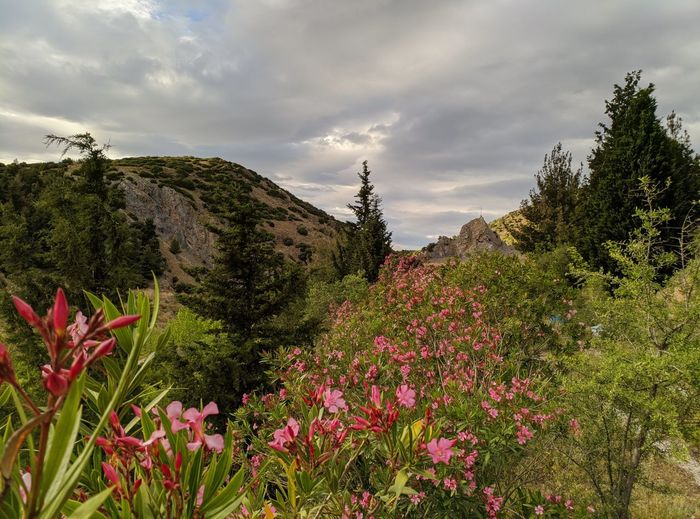Scenic view of pink flowering plants and trees against sky