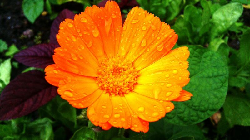 Feel The Journey цветок  оранжевый капли дождя роса сад