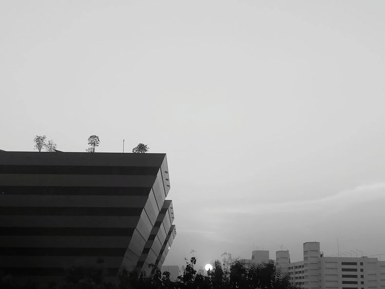 I'm bored 😒 White Black Blackandwhite View Window View Architecture City Skyscraper Building Exterior Built Structure Outdoors Bird Low Angle View
