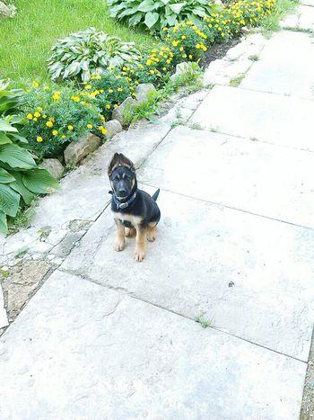 Love ♥ I Love My Dog Happy
