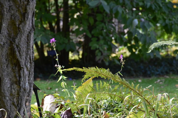 Beauty In Nature Beth Chato Gardens Day Elmstead Market Fern Flower Flower Head Fragility Freshness Growth Horizontal Nature No People Outdoors Plant Wildflower