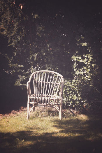 empty chair on field against trees Plant Tree Nature Seat No People Empty Chair Field Land Day Absence Outdoors Growth Sunlight Tranquility Grass Wood - Material Beauty In Nature Old Garden Nature Spring Autumn Plant Summer