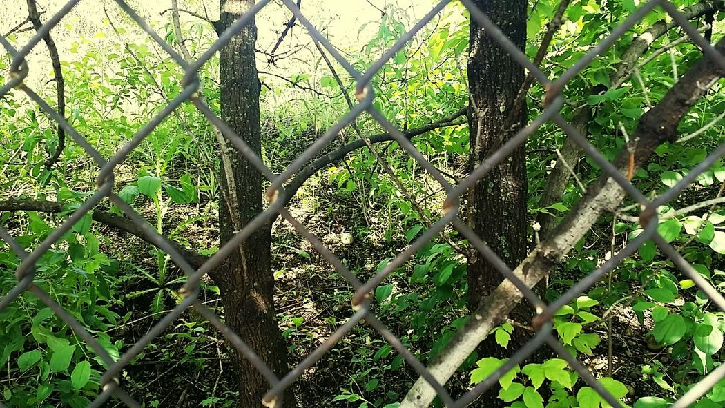 Taking Photos Chicago Fresh Air Enjoying The Sun My Hobby Chain Link Fence Urban Jungle Abandoned Places Just Out Of Reach