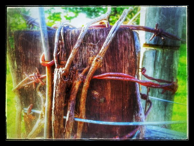 happy Barbed Wire Wednesday Barbwire Wednesday Hdr_Collection Rust Never Sleeps