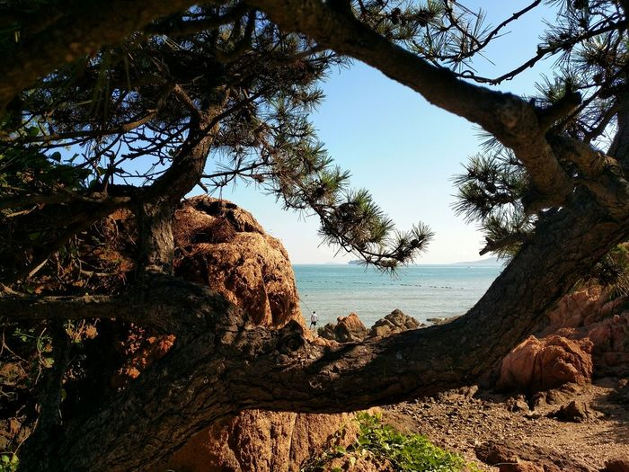 Trees by rock formation on sunny day