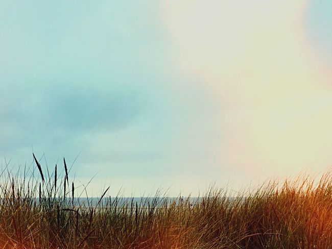 Landscape Nordsee Insel Langeoog Sea Ozean Follow4follow Followback Dünen Beach Beachphotography Moin Beautiful Blue Sky Meer Strand Nature Backgrounds