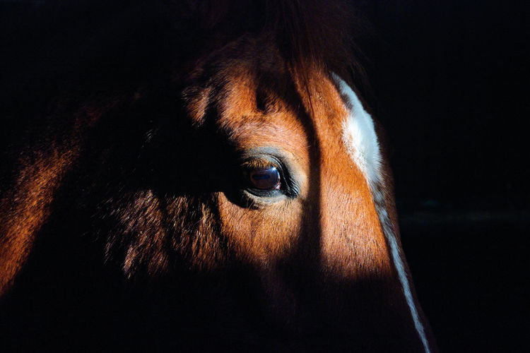 Close-up of horse eye against black background