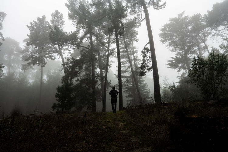 People walking in forest against sky