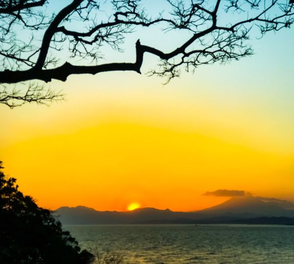 Seascape Sunset Nature Tree Silhouette Beauty In Nature Scenics Tranquility Bare Tree Outdoors Tranquil Scene Sky No People Clear Sky Branch Landscape Mountain Iphone7plusphoto Iphone7plusphotography Japan Photography Mt. Fuji Seascape Seaside Sea And Sky Beauty In Nature Silhouette