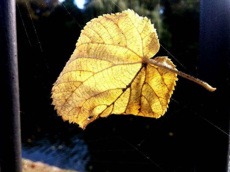 Herbststimmung Laub Blätter Macro Herbstlich Flower Beauty In Nature Best Of Nature Nature Water Spiderweb Spider Web Best Of EyeEm
