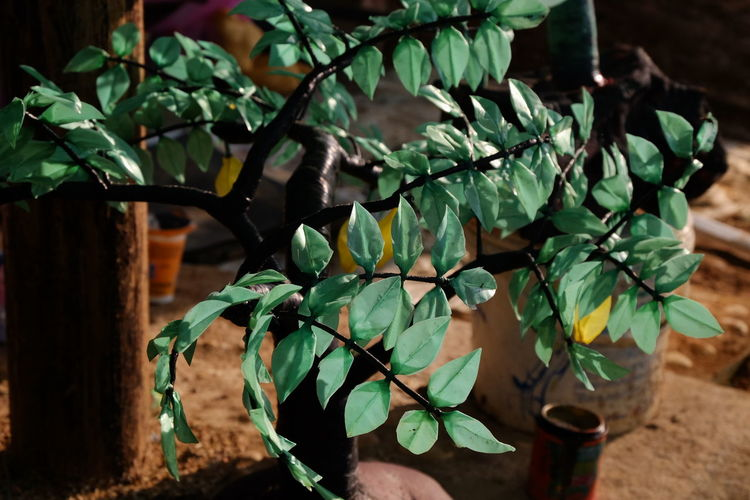 Handmade For You Plastic Tree Leaf Growth Nature Plant Close-up Green Color No People Freshness Beauty In Nature Outdoors Branch Day