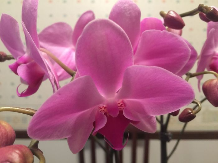 Orchid First