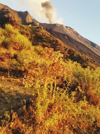 Stromboli ! Stromboli Tree Sky Plant Active Volcano Volcanic Activity Volcano Physical Geography Volcanic Rock Emitting Sulphur Erupting Volcanic Crater