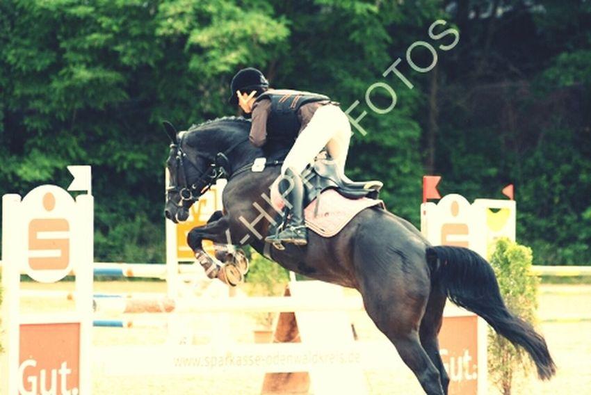 Horse <3 Jump High Love♥ Soleil☀️
