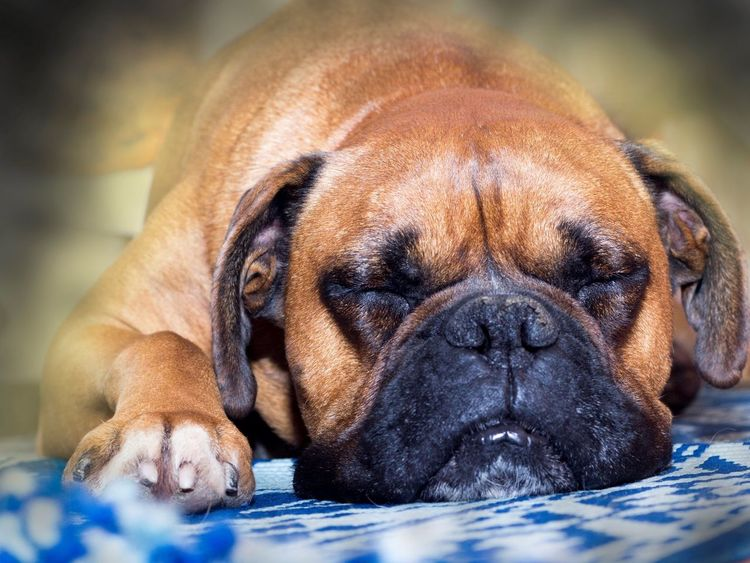 Dog Close-up Day Sighetu Marmatiei HuaweiP9 Love ♥ Fido