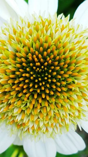 Up Close Flowers Flower Closeup Flowers,Plants & Garden Flower Collection Flowers, Nature And Beauty Flower Head Flower Photography Flowers_collection Flower Collection Eye Em Nature Lover Flower Beauty In Nature Beautiful Nature