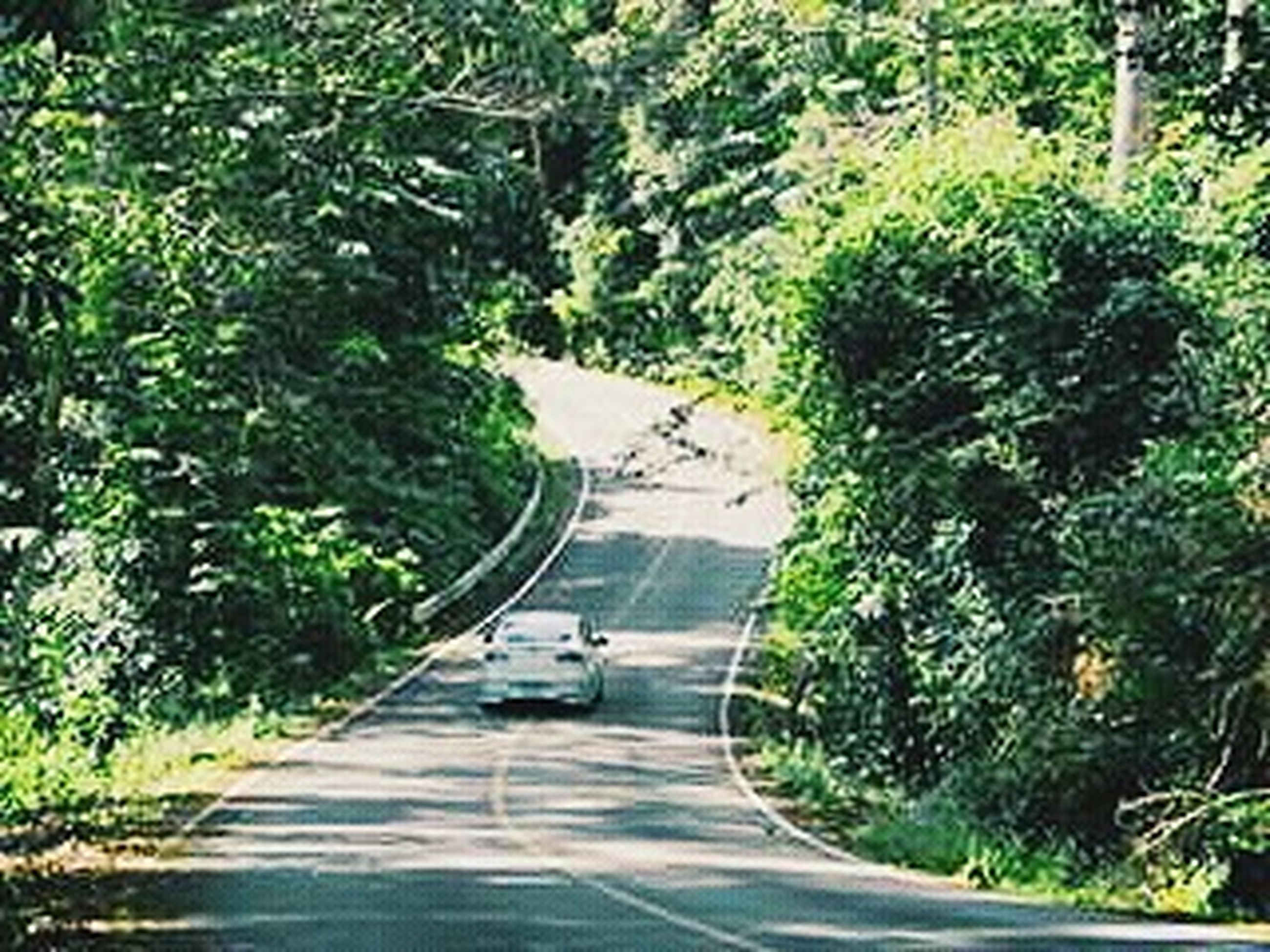 transportation, tree, the way forward, road, mode of transport, green color, car, land vehicle, growth, high angle view, diminishing perspective, street, vanishing point, on the move, lush foliage, road marking, plant, nature, day, no people