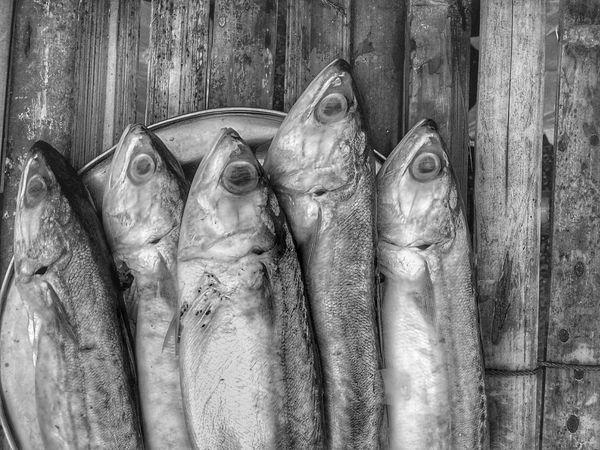 Mackerel Mackerel Fish Close Up Close Up Photography Close Up Collection Close Up Fish Black And White Black And White Photography Black And White Collection  Black And White Fish Fish