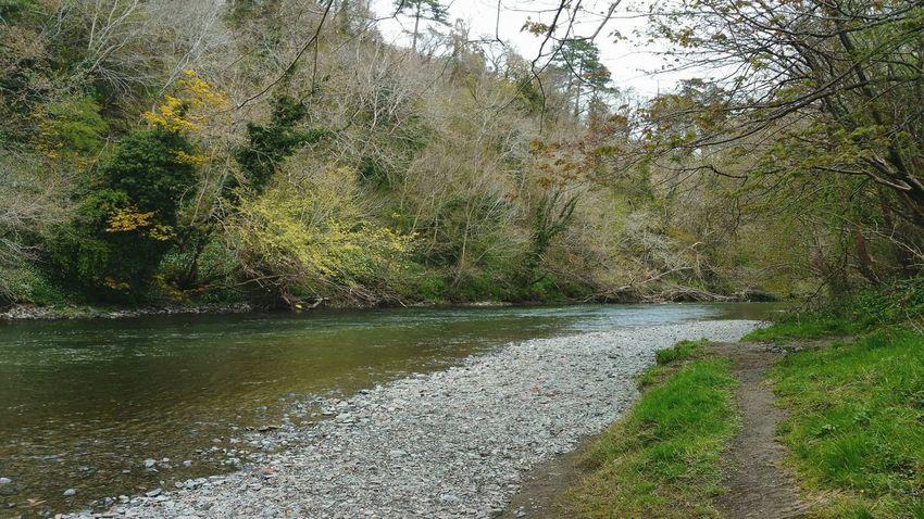 The River ... Newtown Powys Spring Today Wales река Water берег Hafren Severn Sabrina Riverside Nature Naturaleza Primavera весна