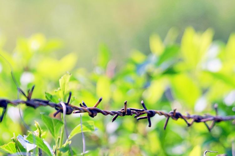 Close-Up Of Barbed Wire Against Plants