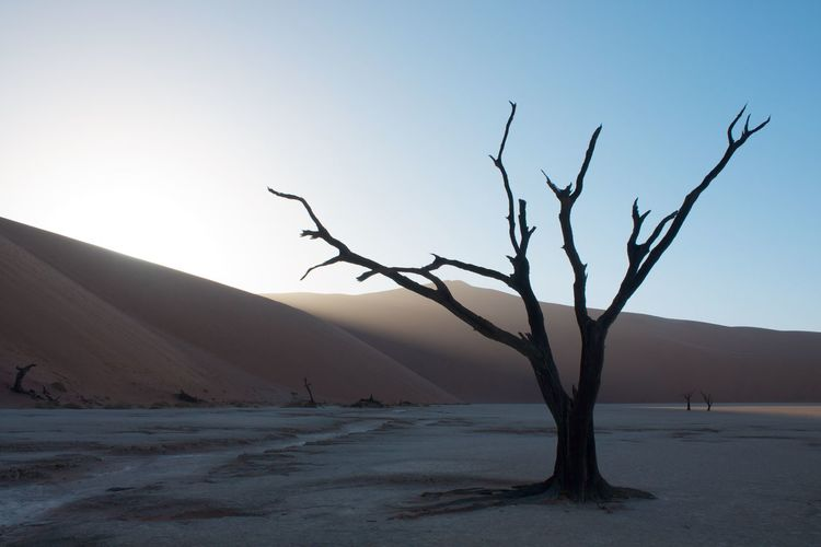 Branch Day Deadvlei Desert Environment Landscape Mountain Namib Desert Namibia Nature Nature Photography No People Orange Outdoors Plant Sand Dune Scenics Tree Tree Trunk Miles Away The Great Outdoors - 2017 EyeEm Awards The Great Outdoors - 2018 EyeEm Awards