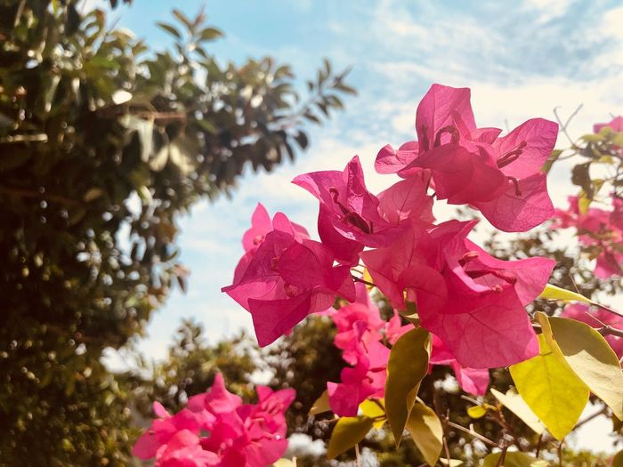 Pink flowers Petal Wildlife & Nature HongKong Travel Destinations Plant Nature Beauty In Nature Sky Tree Leaf Close-up Plant Part No People Flower Flowering Plant Growth Day Red Fragility Vulnerability  Pink Color Outdoors Cloud - Sky Focus On Foreground
