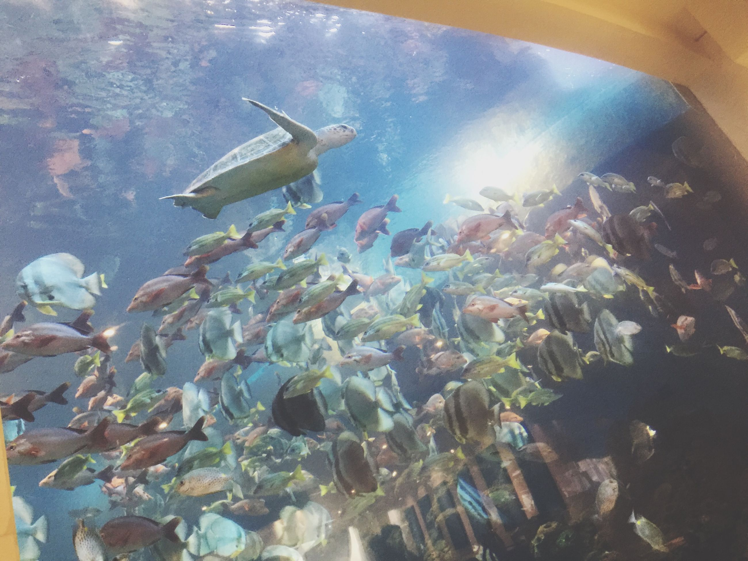 animal themes, animals in the wild, wildlife, one animal, low angle view, fish, swimming, water, zoology, nature, flying, no people, freshness