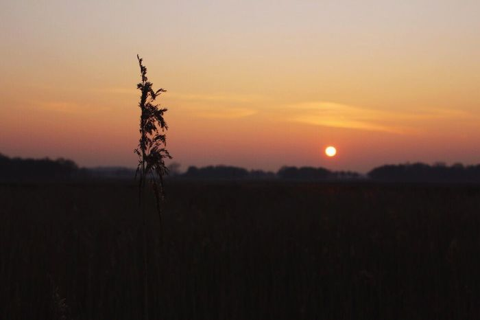 Sunset Landscape Nature Field Tranquility Sun Scenics No People Sky North Germany