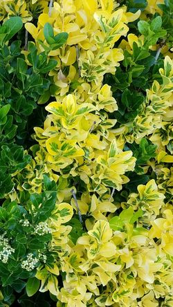 Nature Growth Yellow Green Color Leaf Plant Freshness No People Close-up