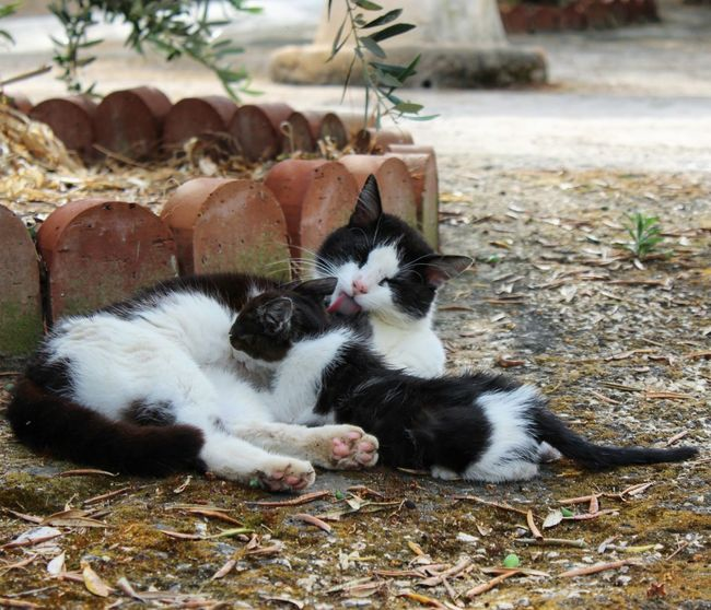 Cats Tendresse Chats Mom And Daughter Cats Lovers  Tenerezza Blackandwhite Somiglianze Nature_collection Day Beauty In Nature Two Is Better Than One