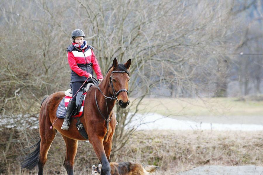 🎀 Best feeling! Horsesofinstagram Meandmyhorse Meinpferd Warmblut Warmblood Dressage österreichischeswarmblut Equestrian Life Equality Instagramers Me Hello World