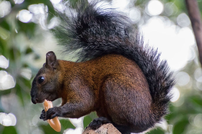Hungry Squirrel! JUNKFOOD Fast Food HungryGames Mexico City Chapultepec CDMX One Animal Animal Themes Nature Wildlife & Nature Wild Animals Animals In The Wild EyeEmNewHere