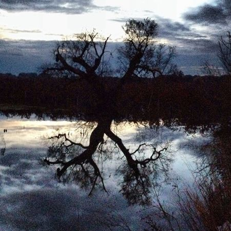 Taking Photos EyeEm Gallery Water_collection TreePorn