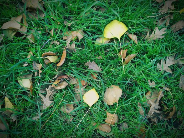 Leaves Autumn Leaves Fall Leaves Leaves_collection Fallen Leaves Trees Grass Leaves EyeEm Nature Lover Nature_collection Nature Naturelovers Nature Photography Hojas Yellow LeavesHojas Secas Leavesporn Leaves Only Leaves Falling Leaves Dead Leaves