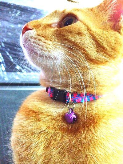 My beatiful son 😍 Cutecats Friend Lovecats Littlefriend Cute Pets Animal Love Lovely Likeasun Likeachild