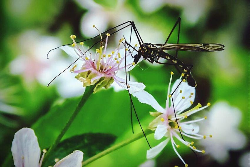 комар лето макро насекомые зелень  цветок  First Eyeem Photo Macro Summer Insect Colors Green Flower