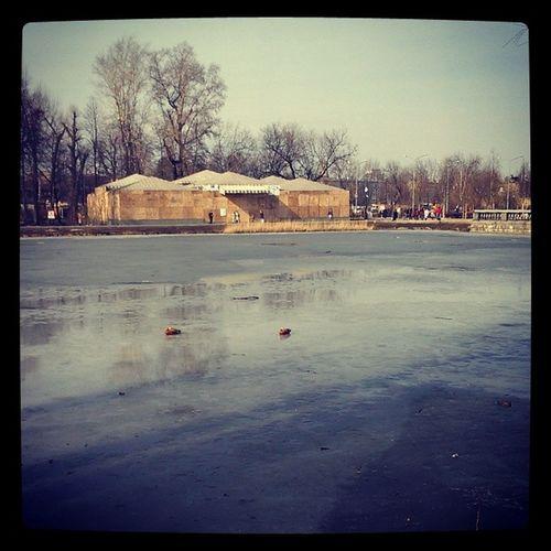 Ducks Parkkultury Parkgorkogo Parkofcultury