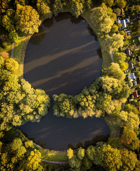 High angle view of yellow flowering plants by lake